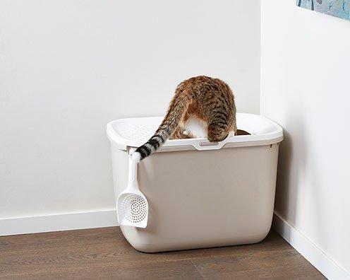 Lettiera chiusa per gatti, con ingresso dall'alto