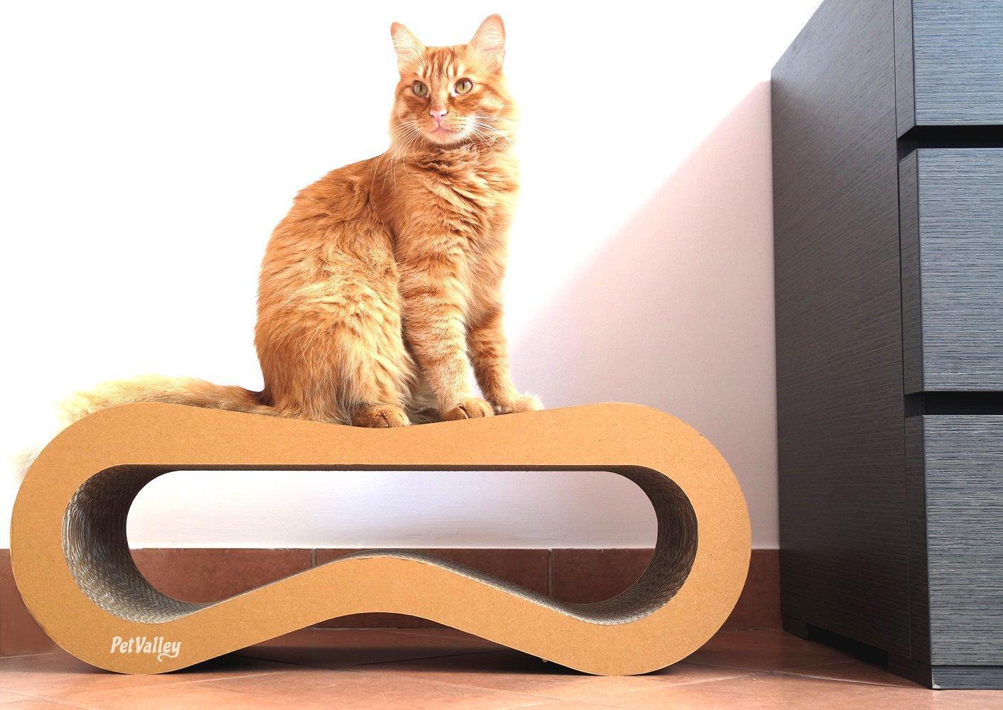 Cuccia, Palestra e Graffiatoio per gatti