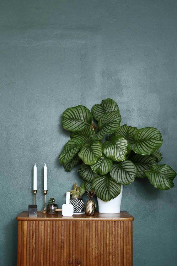 pianta tropicale Calathea su mobile