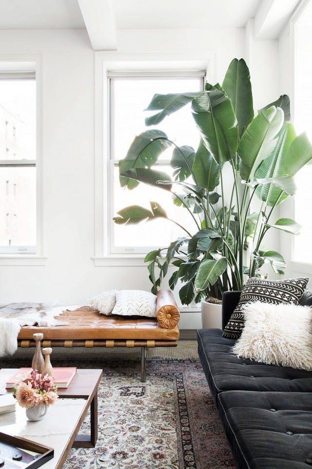 pianta di Banano angolo living room