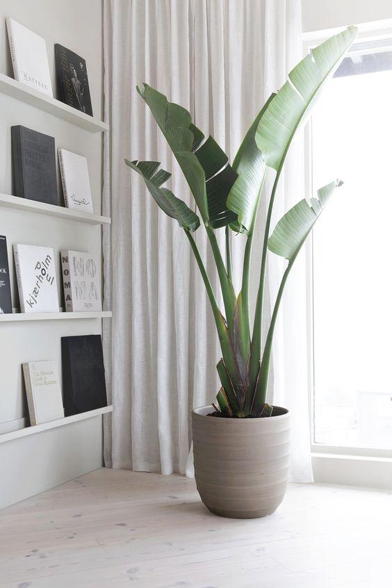 pianta di Banano vicino finestra