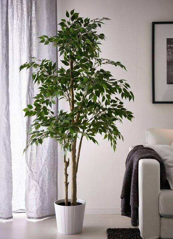 soggiorno arredato con pianta da appartamento Ficus Benjamina