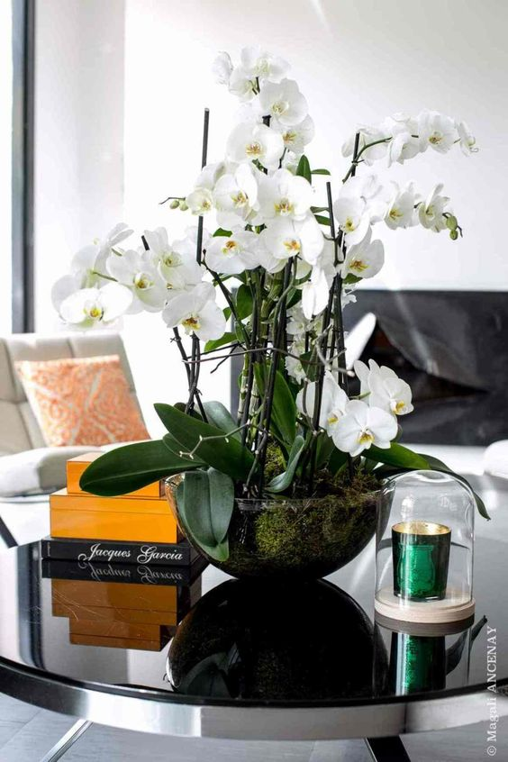 Orchidee su tavolo