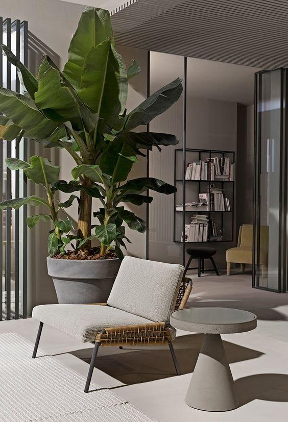 soggiorno arredato con le piante grasse
