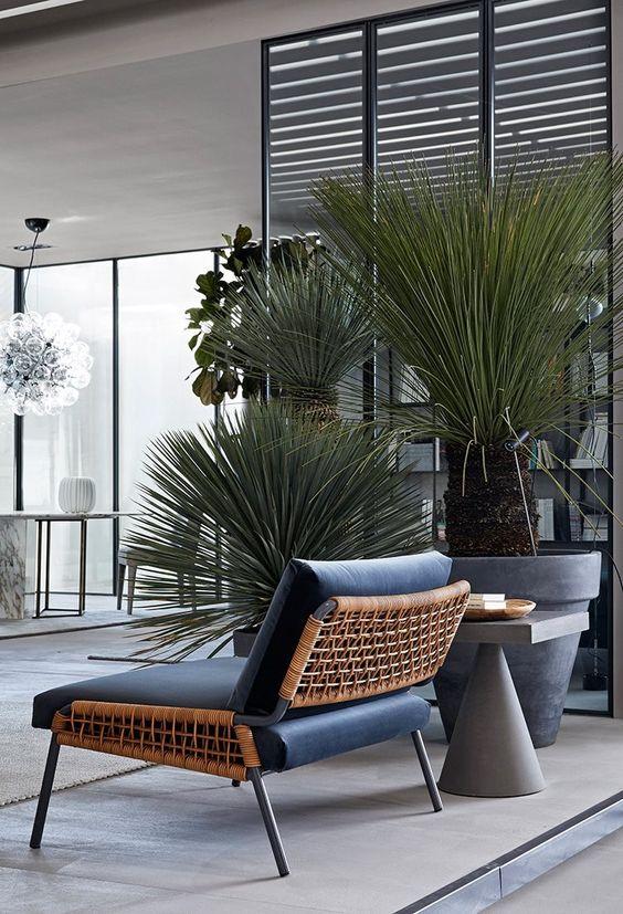 soggiorno con piante grasse da appartamento
