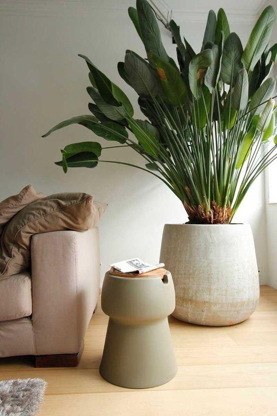 pianta in un soggiorno arredato