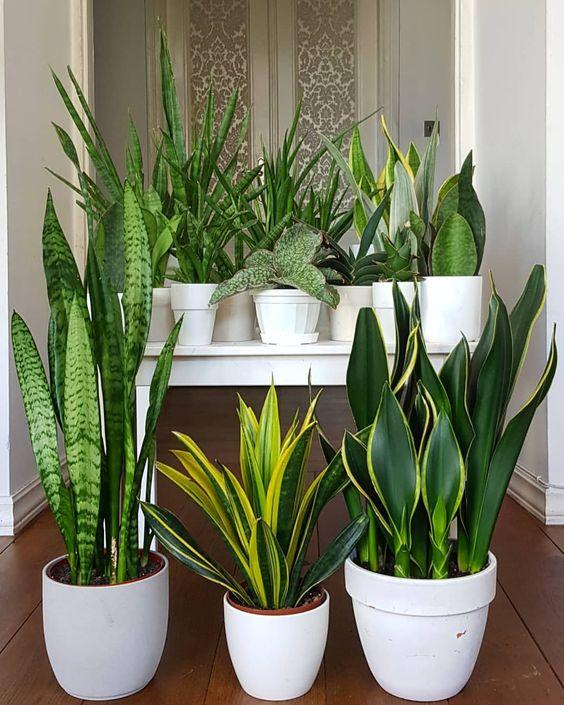 piante diverse disposte insieme