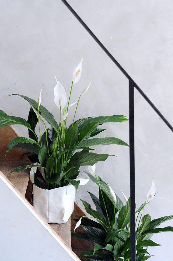 scale arredate con pianta Spatifillo